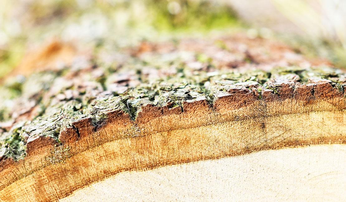 مستند فارسی چوب ماده شگفت انگیز است